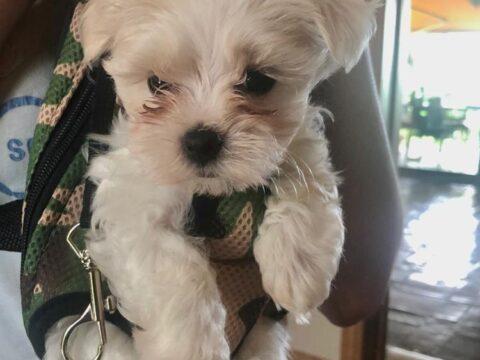 Ropa de otoño/invierno para perros pequeños