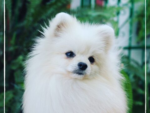 ¿Por qué tiemblan los perros pequeños?