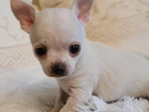 14 razas de perro que son muy sensibles al frío